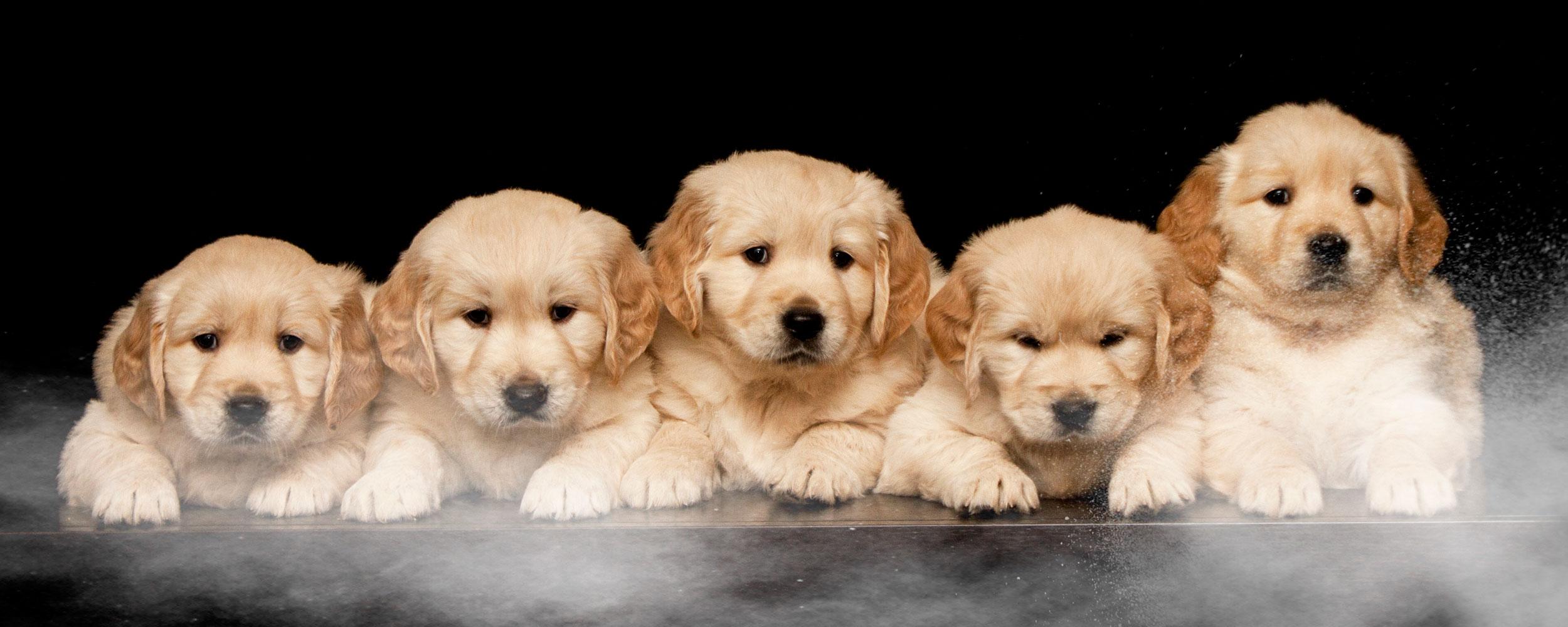 segredo-boa-alimentacao-cachorros