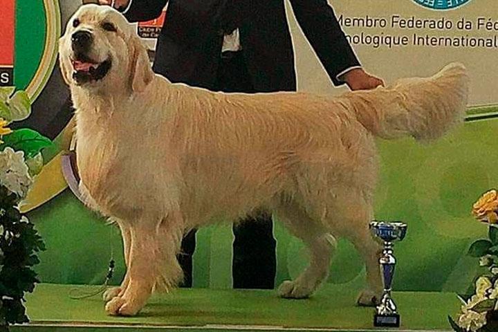 exposicao-canina-boscardini-potter